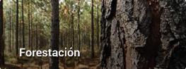 link-forestacion