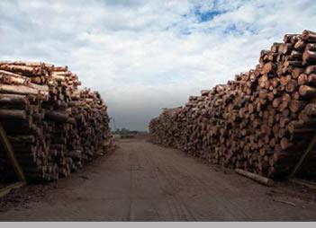 madera3