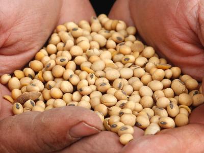 El mercado de soja asimila las primeras definiciones de Brasil