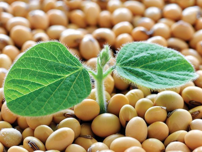Soybean takes note of the first planting trends in the usa