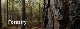 link-forestacion-en